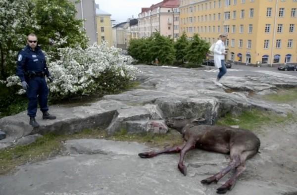 В Хельсинки олень выпал из окна банка