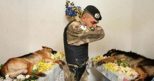 Фото погибших в спецоперации полицейских собак из Бразилии