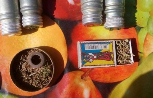 Обнаружены растения конопли и емкости с каннабисом