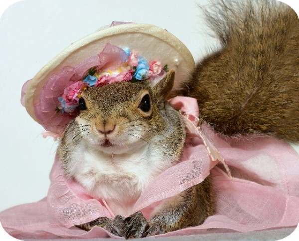 Sugar Bush Squirrel  International Superstar  Supermodel