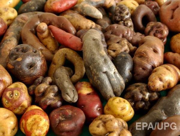 Сорта картофеля, который будет расти на Марсе