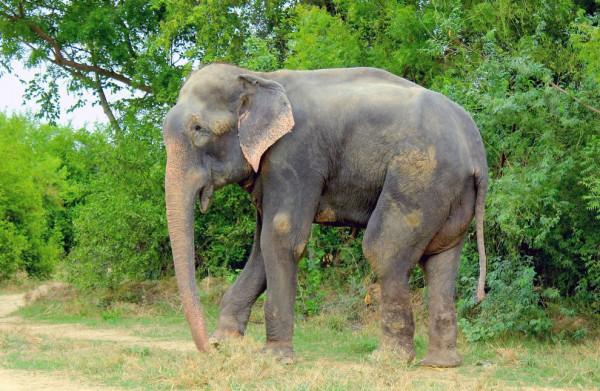 Фото порно з слоном фото 437-936