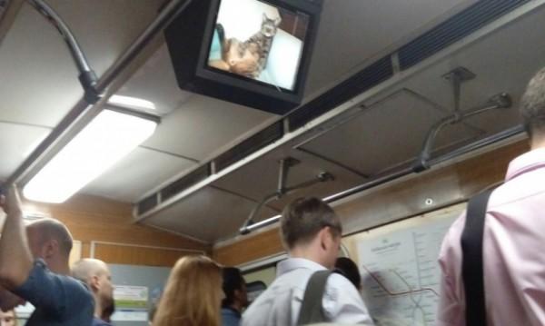 На экранах вагонов появились коты