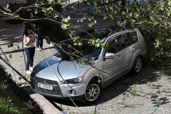 Во Львове ветер повалил деревья в нескольких местах