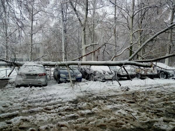 Снег и ветер валили деревья