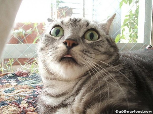 фото кота испуганное