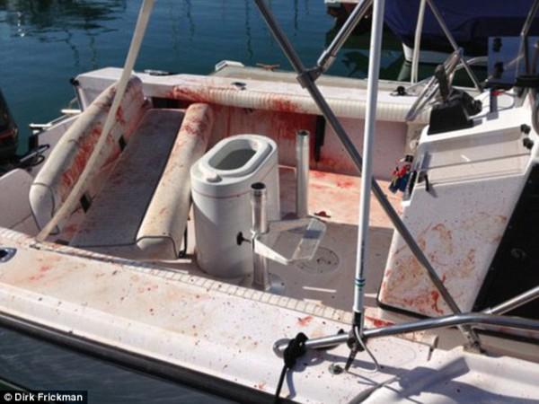 Дельфин запрыгнул в лодку
