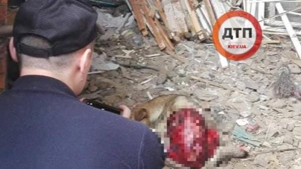 В районе нашли еще одну собаку с такими же травмами