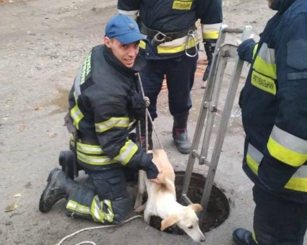Спасателям часто приходится помогать животным