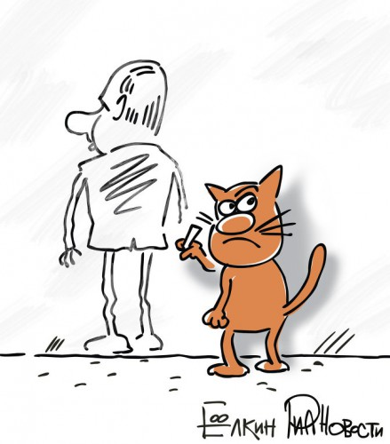 Фото котов путина