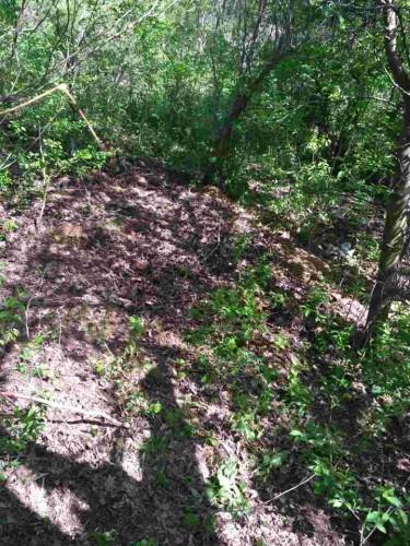 Тело военного закопали в лесополосе