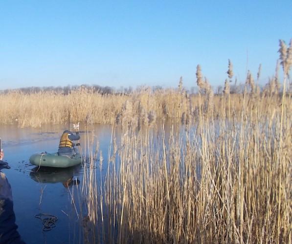 К птице пришлось подплывать в лодке