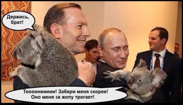 """Единственным другом Путина на саммите """"Большой двадцатки"""", оказалась коала, - западные СМИ - Цензор.НЕТ 7213"""