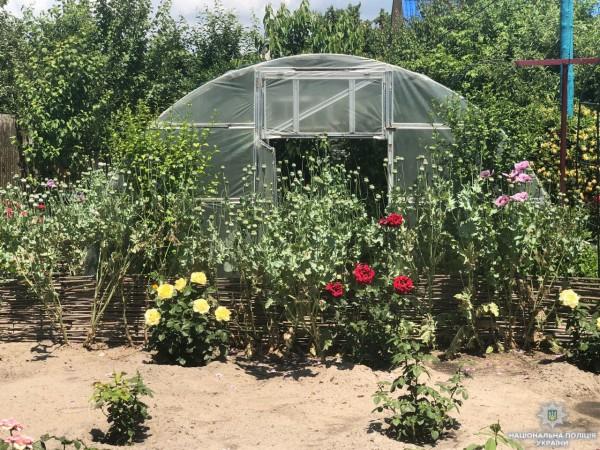 Снотворный мак наркодилерша выращивала в теплице, среди роз