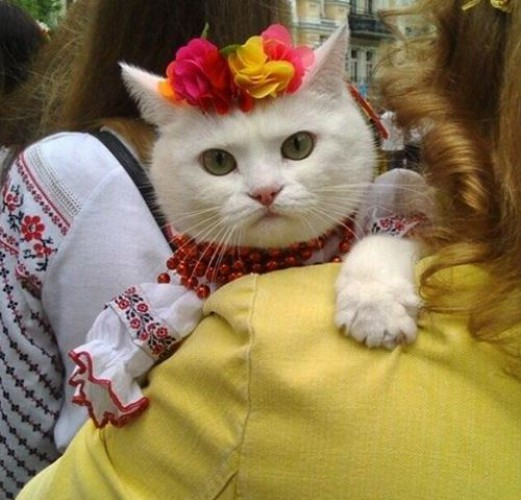 """""""Носить ее нужно не один раз в год"""": украинцы отметили День вышиванки - Цензор.НЕТ 4059"""