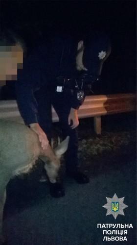 Патрульные доставили животное в ветеринарную клинику