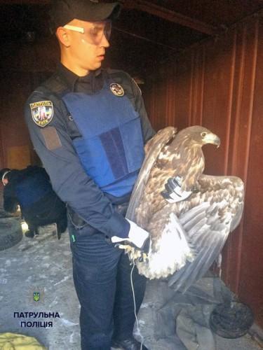Патрульные полицейские освободили хищных птиц