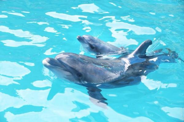 Многие свидетели рождения дельфиненка успели сделать фото