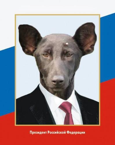 В последнее десятилетие в России стали чаще есть собак, - Роспотребнадзор - Цензор.НЕТ 7423