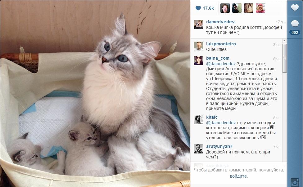 Россияне просят у Медедева котенка