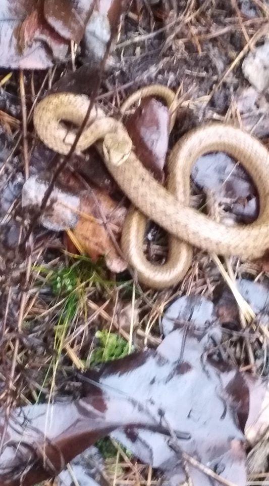Зоологи говорят, что змеи спасут себя сами