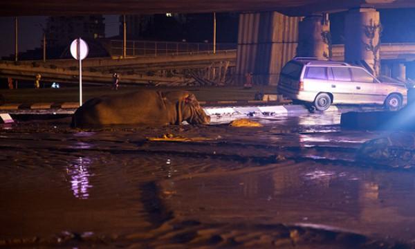 В результате наводнения из зоопарка сбежали животные