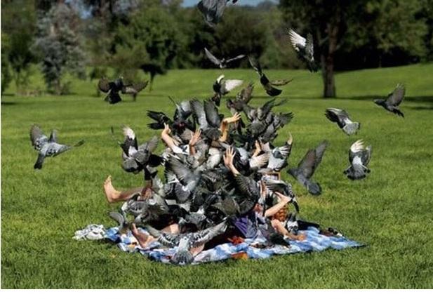 Не кормить голубей (Площадь Сан-Марко в Венеции)