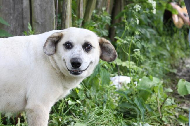 Собака-улыбака