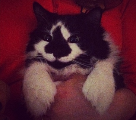 Всегда счастливая кошка живет с новой хозяйкой уже 4 года