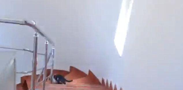 Леон несется по ступенькам к последней двери - входной