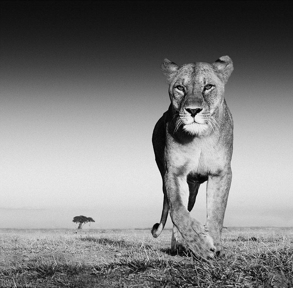 природа фото черно белые