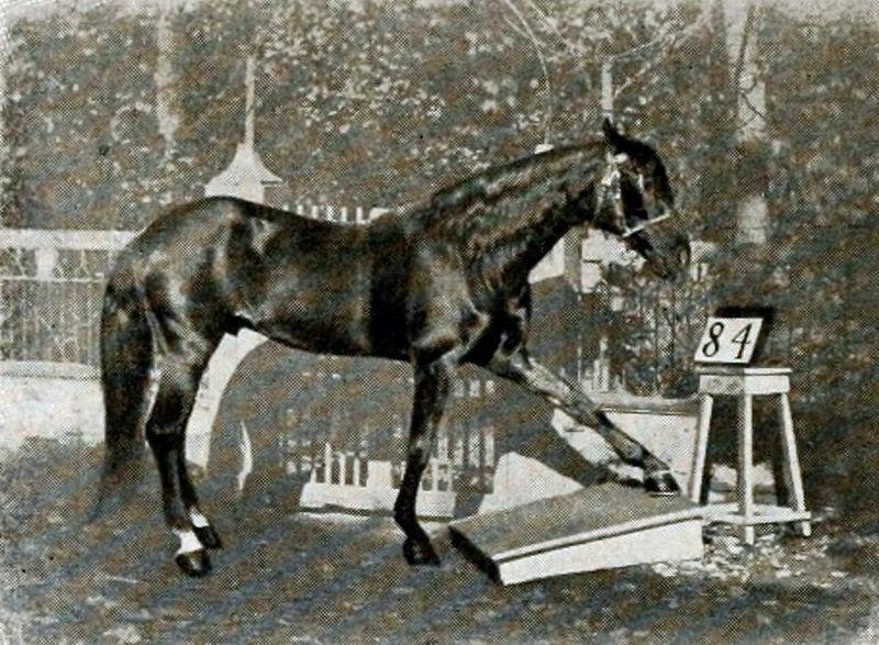 Умный Ганс — настоящий конь математики