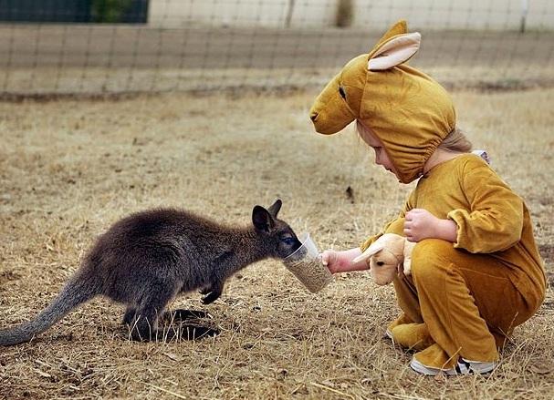 На контакт с девочкой шли даже самые маленькие кенгуру