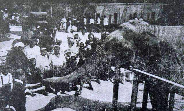 Слониха Мэри. Фото 1935 года.