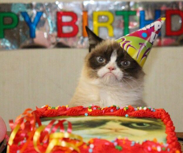 Кошка Тарт отметила первый день рождения