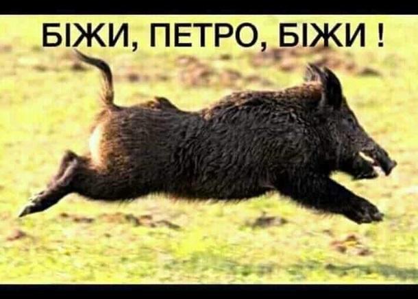Беги, Петр, беги