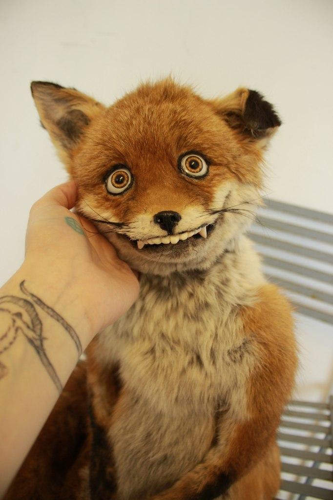 Упоротый лис улыбается
