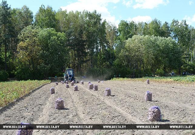 Лукашенко с сыном Колей убрали урожай картофеля