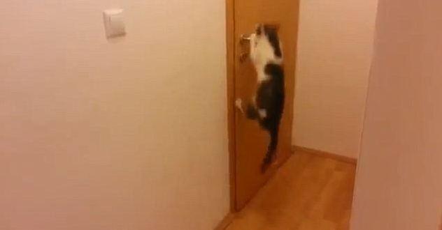 Один прыжок на ручку - и дверь открыта