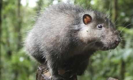 Гигантский грызун наводил ужас на китайскую деревню. Власти считали, что жители просто увидели бобра.