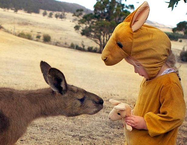 Маму-кенгуру заинтересовал плюшевый детеныш