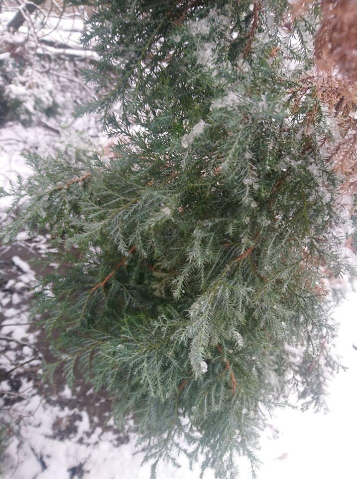 Само дерево из парка после спиливания так и не забрали