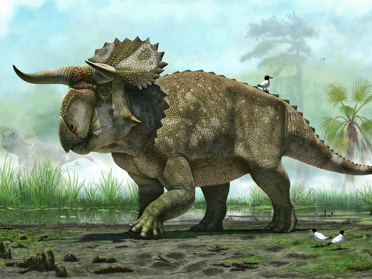 Новый вид похож на триццератопса или авацераптоса