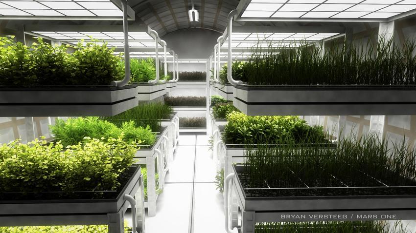 Марсонавты сами будут выращивать себе еду