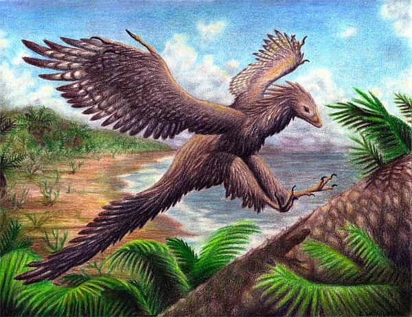 Динозавры превратились в птиц за 50 млн лет
