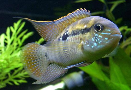 Рыба может не только плавать в воде, но и лазить по деревьям
