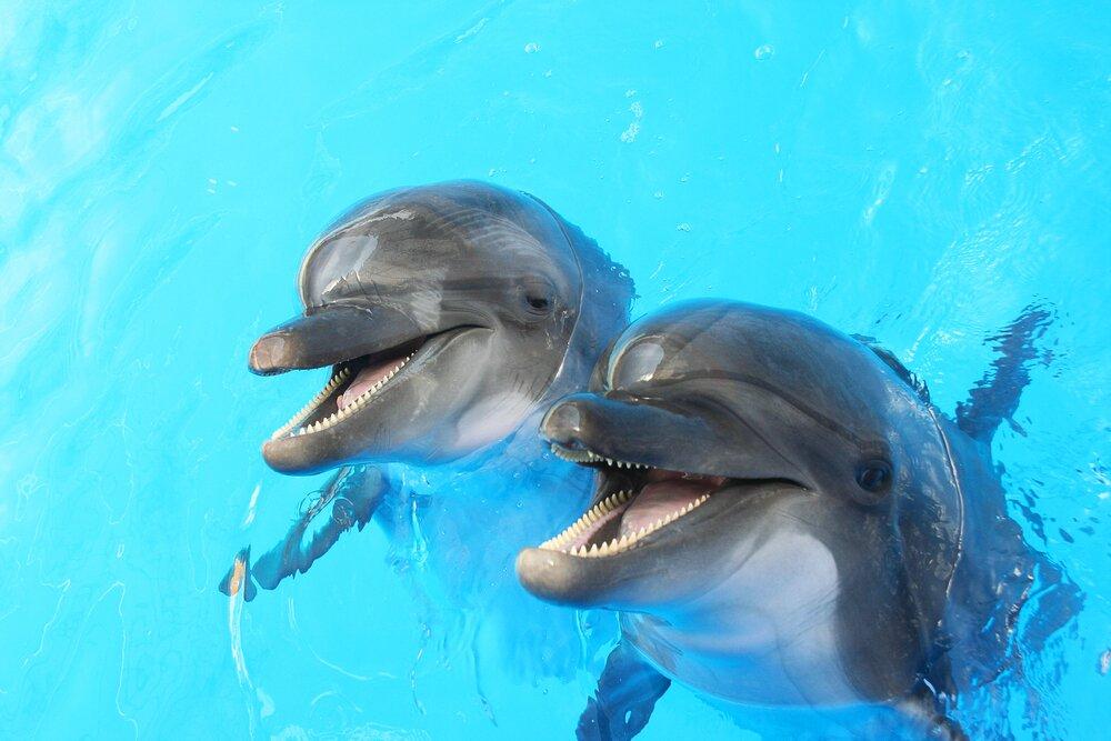 Дельфин — 210 зубов