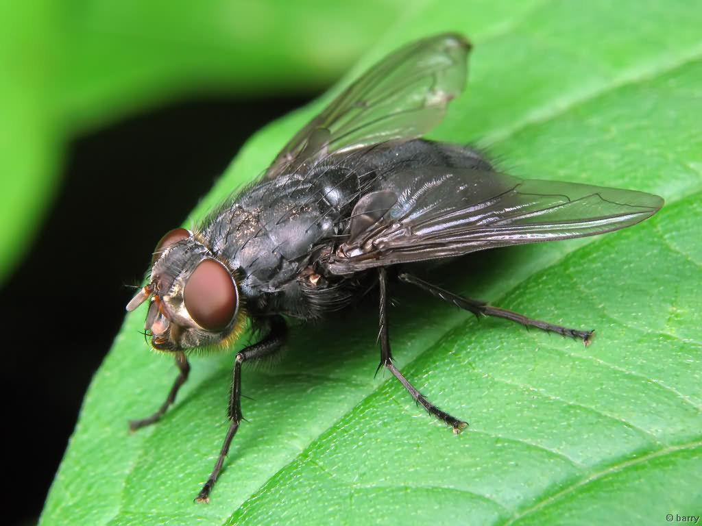 Для мухи время летит медленнее