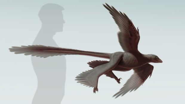Сравнение человека и пернатого динозавра