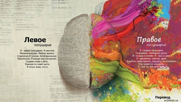 Ранее считалось, что полушария мозга выполняют разную работу